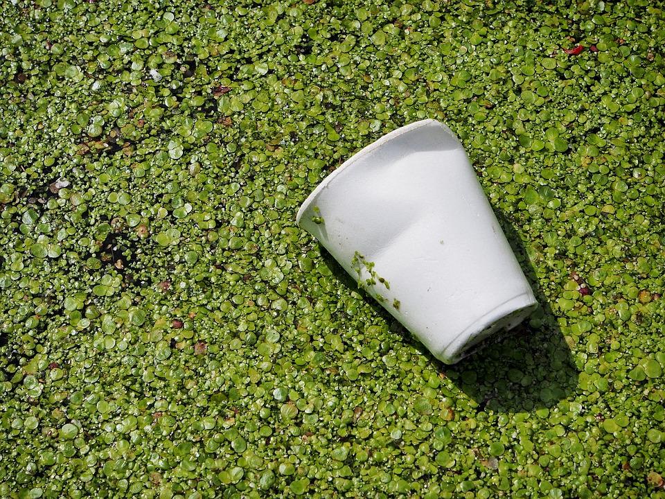 Vaso de plástico. En Serriver.es estamos comprometidos con el medio ambiente